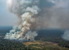 1€ -> Plantation d'un arbre en Amazonie