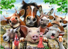 Financement formation auxilliaire veterinaire