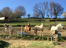 Refuge Petit Ranch