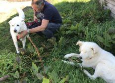 Sirius Dog Sanctuary