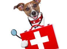 Frais de véto pour soins et hospitalisations diverses, sans mise en conformité depuis le début de l'année