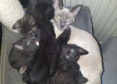Aufgenommene Findel Kätzchen