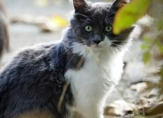 Stérilisation d'une colonie de chats errants en Moselle