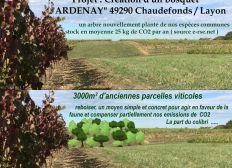 projet de création d'un bosquet à Ardenay