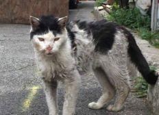 Aide aux Chats libres de Saint Amand les Eaux