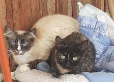 SOS pour les chats du refuge La Ferme des Rescapés