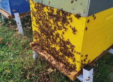 Installons une ruche à la FGES !