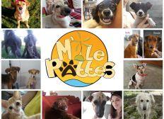 Organisation de campagnes de stérilisation de chiens et chats errants à l'Île Maurice