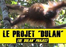 KALAWEIT pour la Forêt de DULAN