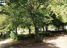 Sauvons les 49 grands arbres de la Place de la République