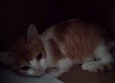 Besoin de votre soutien pour nos chats gravement malades!