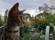 Jeune chatte trouvée abandonnée et pleine