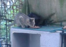 Sos chats abandonnés