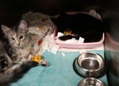 Hilfe für kitten