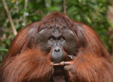 1000 Bäume für Borneo