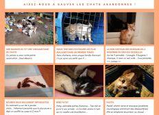 Cagnotte pour le sauvetage des chats abandonnés en Creuse