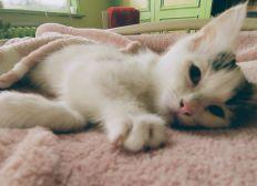 Arya Warrior Cat