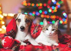 Un Noël De Bête