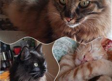 Hilfe für Strassenkatzen auf Zypern