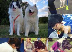AMA Association d'Assistance et Médiation par l'Animal