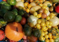 Maraîchage en permaculture et agro-écologie sur petite surface en Normandie