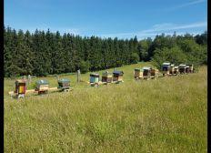 Un rucher pour la vie