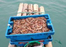 Hacia una pesca artesanal de langostino sin arrastre de fondo
