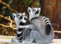 Reconstruisons ensemble le Zoo d'UPIE
