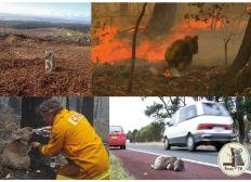 Venez en aide aux KOALAS d'Australie avec Rescu'EM