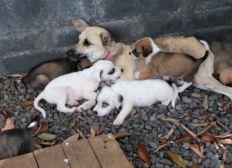 Pour la chienne de Cambaie abandonnée avec ses 6 chiots et frappée à coups de baton !