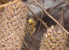Des abeilles et des arbres au Fouta Djalon (Guinée)