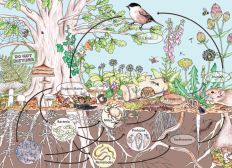 Ma Formation en Permaculture