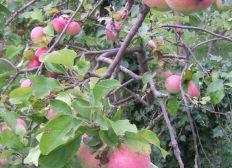Plantations d'arbres fruitiers dans des quartiers défavorisés