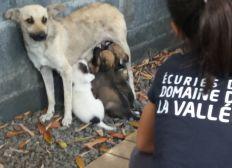 Pour la pension de Bianca et ses 6 chiots , abandonnée et frappée à Cambaie