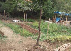 Le potager des Minipommes, jardin pédagogique en permaculture