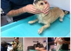 Frais vétérinaires urgentes - Charly le Blanc