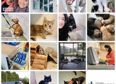 Une aide précieuse pour les animaux de refuge