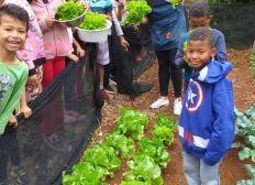 Alquimia's veggie garden
