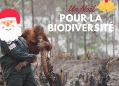 Pour Noël, protégeons la forêt indonésienne et ses habitants