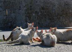 Los Gatos de la Cala