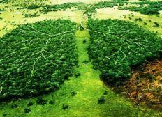Un arbre pour mon pays, un arbre pour la vie!
