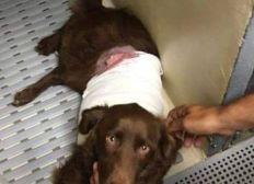 Aidez le refuge de Caldaniccia à régler ses frais vétérinaires