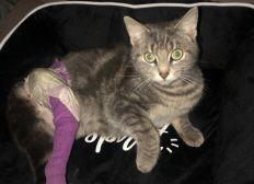 Aide à bébé chat accidenté