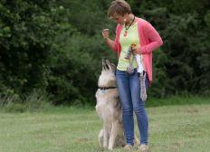 3 jours pour entraîner (et embrasser) les loups !