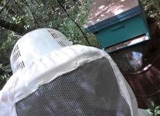 Ayudemos a las abejas
