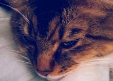 Chabidou, mon chat