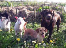 Aide aux soins des animaux de la Cour des Aulnays