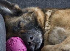 Arche Hakki's Dog