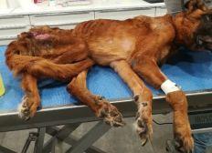 LA COMPAGNIE DU COEUR - Aidons les animaux en souffrance