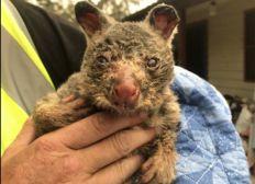 Un don pour les animaux d Australie